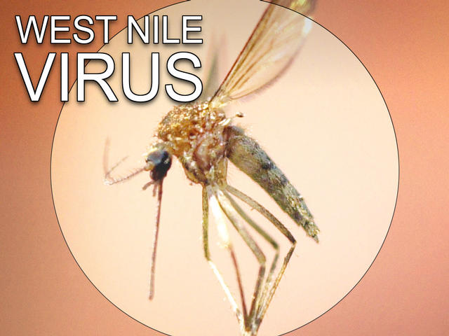 Third Time West Nile Virus samples test positive in Colleyville