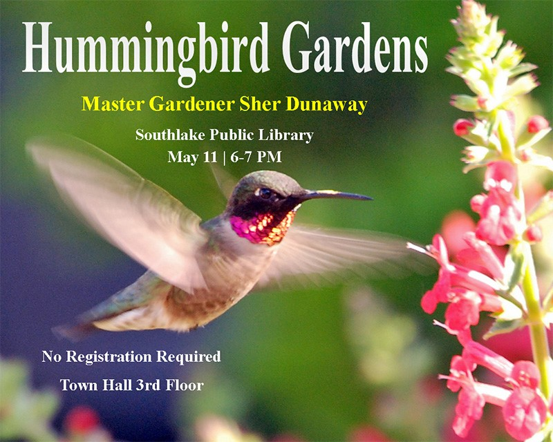 Humming Bird Gardens Southlake, Library May 11| 6-7 pm