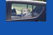 A VERY light-hearted video about hot dogs in cars -- Reminder don't leave dogs in a Hot Car