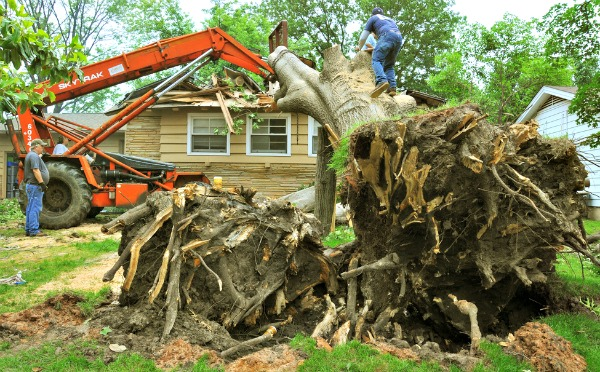 Tulsa, OK, May 17, 2010 -- Workmen work carefully to remove a huge tree that fell on a home when the area was struck by a tornado on May 10.  There were 22 confirmed tornadoes that swept the eastern half of the state, resulting in the fourth largest single-day oubreak in Oklahoma's history.  FEMA Photo by Win Henderson