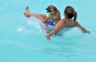 Hawaiian Falls Pool Parties for Pooches